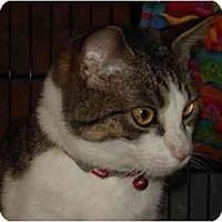 Adopt A Pet :: Bennett - Chesapeake, VA