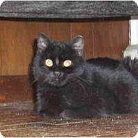 Adopt A Pet :: Johnny Cat - New Egypt, NJ