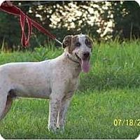 Adopt A Pet :: Duke - Honaker, VA