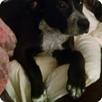 Adopt A Pet :: Easy - Richmond, VA