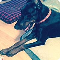 Adopt A Pet :: Pedro - Arlington, VA