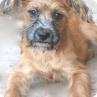 Adopt A Pet :: Enchilada - Norwalk, CT