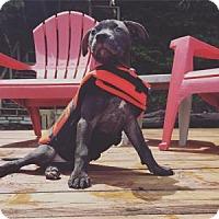 Adopt A Pet :: Julep - Marietta, GA