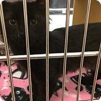 Adopt A Pet :: Dinah - Byron Center, MI