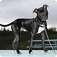 Adopt A Pet :: Gia - Bellingham, WA