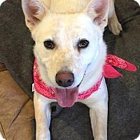 Adopt A Pet :: SYDNEY - Pilot Point, TX