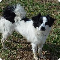 Adopt A Pet :: Dottie - Westport, CT