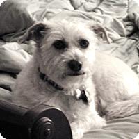 Adopt A Pet :: Bernie - Vista, CA