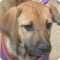 Adopt A Pet :: Reba - Grand Saline, TX