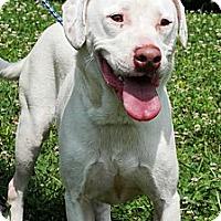 Adopt A Pet :: Roscoe - Cookeville, TN