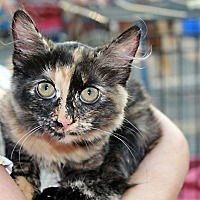 Adopt A Pet :: Layla - Redlands, CA