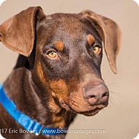 Adopt A Pet :: Moses - Dacula, GA