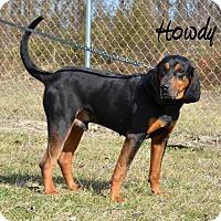 Adopt A Pet :: Howdy - DuQuoin, IL