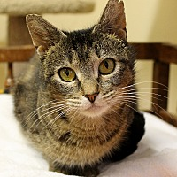 Adopt A Pet :: Nikki - Portland, OR