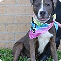 Adopt A Pet :: Josie - Beaumont, TX