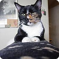Adopt A Pet :: Daisy - Cerritos, CA