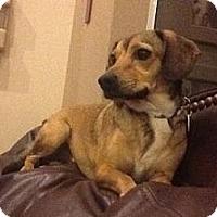 Adopt A Pet :: Luke E Here - Phoenix, AZ