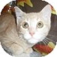 Adopt A Pet :: Miguel - Vancouver, BC