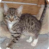 Adopt A Pet :: Milky Way - Davis, CA