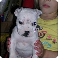 Adopt A Pet :: Luna - Glastonbury, CT