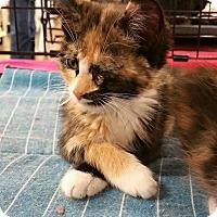 Adopt A Pet :: Butterfly - McDonough, GA