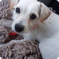 Adopt A Pet :: Roo - San Antonio, TX