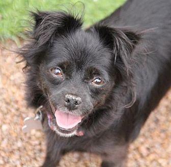 Chihuahua Mix Dog for adoption in Phoenix, Arizona - Everly