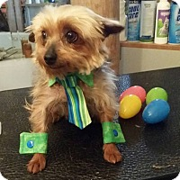 Adopt A Pet :: Bernie - FORT WORTH, TX