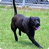 Adopt A Pet :: Heyward - Ridgeland, SC