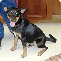 Adopt A Pet :: Adam - Eastpoint, FL