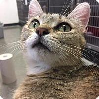 Adopt A Pet :: Mountain Mama - Cincinnati, OH