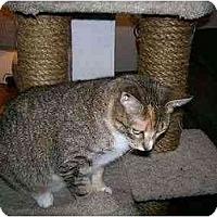 Adopt A Pet :: Annabelle - Sheboygan, WI