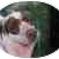 Adopt A Pet :: Mask, very sad story! - Swiftwater, PA