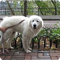 Adopt A Pet :: Louise - Minneapolis, MN
