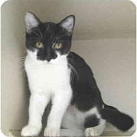 Adopt A Pet :: Sweetheart - Mesa, AZ
