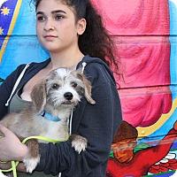 Adopt A Pet :: Foster - San Francisco, CA