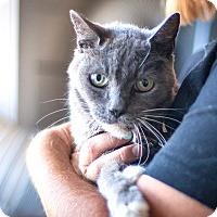 Adopt A Pet :: Bubba - St Helena, CA