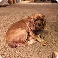 Adopt A Pet :: Samantha 7yr Adopted - Mentor, OH