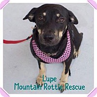 Adopt A Pet :: Lupe - Rexford, NY
