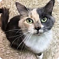 Adopt A Pet :: Hanna - Medina, OH