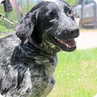 Adopt A Pet :: Sadie - Glastonbury, CT