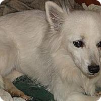 Adopt A Pet :: Snow White - Columbus, IN