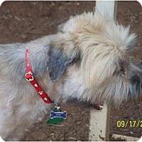 Adopt A Pet :: Miguel - Andrews, TX