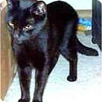 Adopt A Pet :: Zorro - Summerville, SC