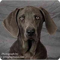 Adopt A Pet :: DESERT - Las Vegas, NV