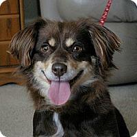 Adopt A Pet :: Molly - Sacramento, CA