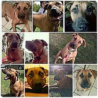 Adopt A Pet :: Genesis - Valley Springs, CA