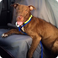 Adopt A Pet :: Eva - Hollywood, FL