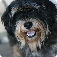 Adopt A Pet :: BJ - Canoga Park, CA
