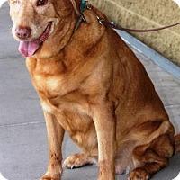 Adopt A Pet :: Reese - Gilbert, AZ